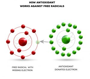 how antioxidant works against free radicals