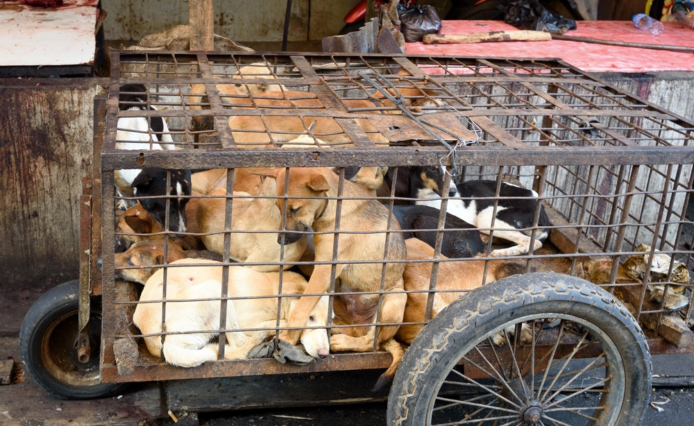 DANGERS DOG MEAT POSE TO YOU